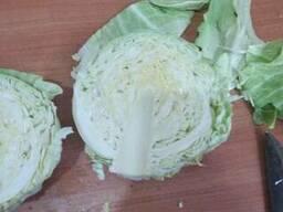 Cabbage from Uzbekistan
