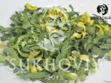 Инфракрасная сушильная камера для продуктов питания Sukhoviy - фото 8