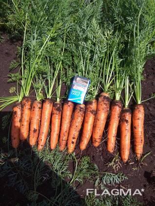 Vindem en-gros morcovi / Морковь столовая оптом.