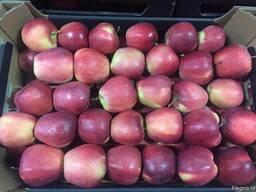 Polish apples, La-Sad - фото 8